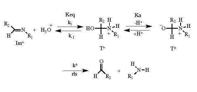 Dr. Predecki Figure 3: Imine Hydrolysis under Acidic Conditions (where R1 and R2 are carbon chains)